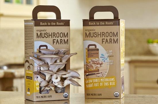 mushroom farm kit