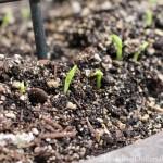Mavis Butterfield | Backyard Garden Plot Pictures 3/15/15