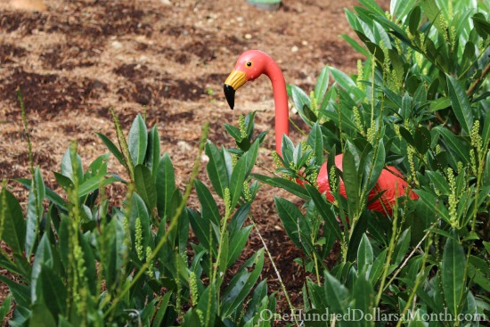 pink flamingo in bushes