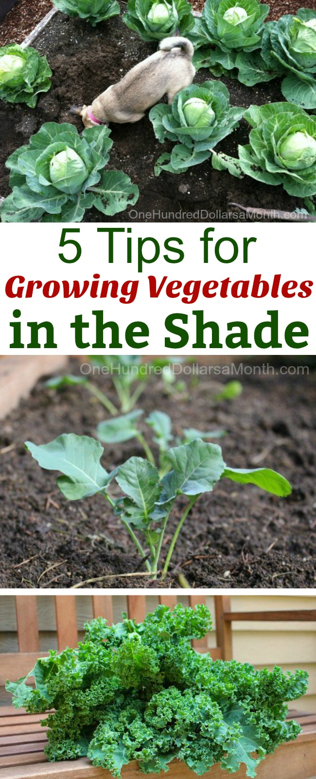5 Tips for Growing Vegetables in the Shade