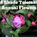 8 Shade Tolerant Annual Flowers