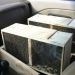 Honey Bees and Langstroth Hives