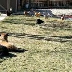 Mavis Mail: Shaun Gives a DIY Chicken Coop Tutorial