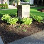 hosta plants front lamppost