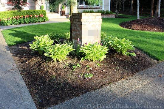 Mavis Butterfield | Backyard Garden Plot Pictures 4/12/15