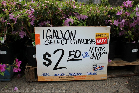 Sweet Deals At The Home Depot Plant And Garden Sale One Hundred Dollars A Month