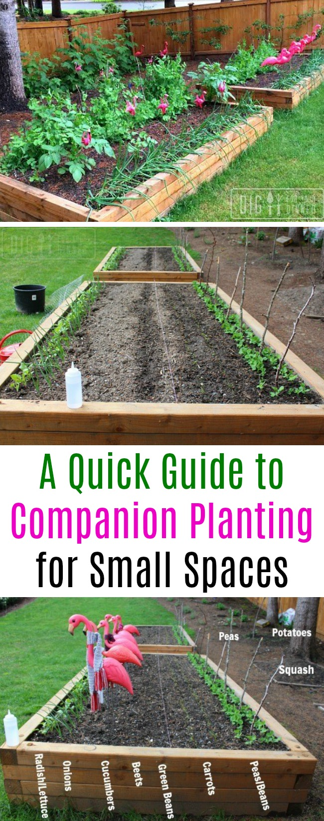 A Quick Guide to Companion Planting
