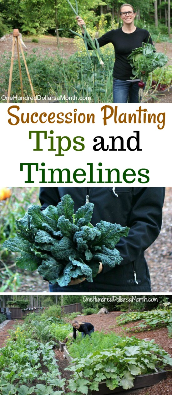 The 411 on Succession Planting