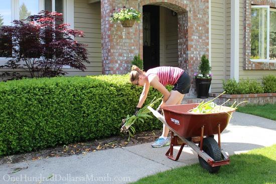 Mavis Butterfield   Backyard Garden Plot Pictures 5/10/15