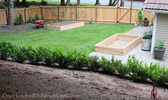 douglass fir garden boxes