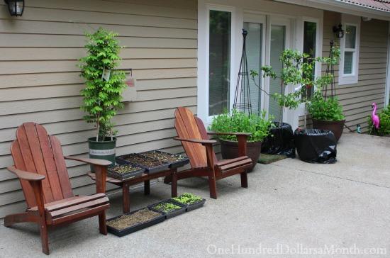 Mavis Butterfield | Backyard Garden Plot Pictures 5/17/15