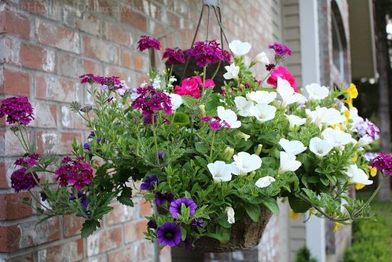Mavis Butterfield | Backyard Garden Plot Pictures 5/31/15