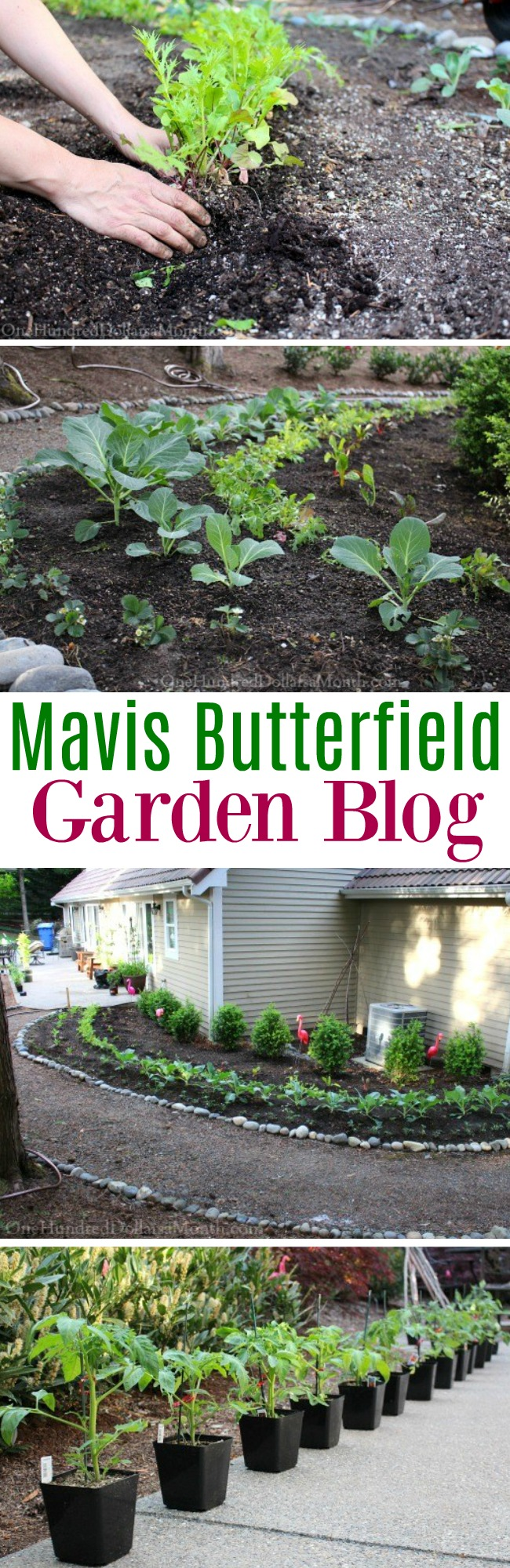 Mavis Butterfield | Backyard Garden Plot Pictures 5/10/15