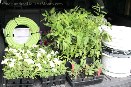 plants in car