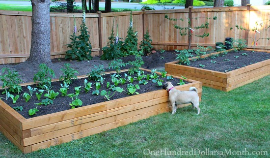 Garden Design With How To Build Raised Garden Beds For Growing Vegetables  With How To Pot