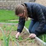 thinning radishes