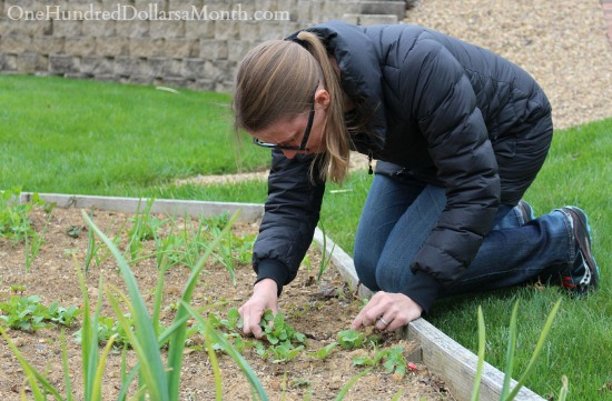 May Home Maintenance and Garden Chores