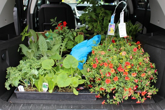 trunk of flowers and veggie starts
