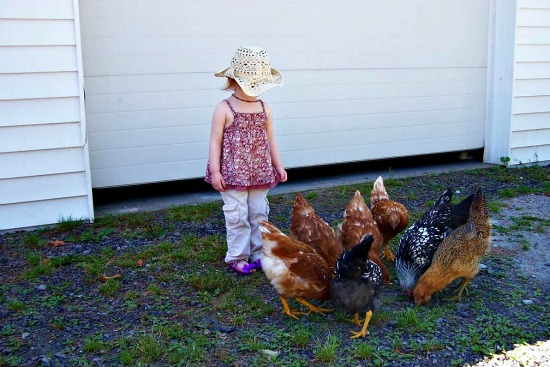 Mavis Mail – Becky From Upstate New York Sends in Pictures of Her Chicken Coop