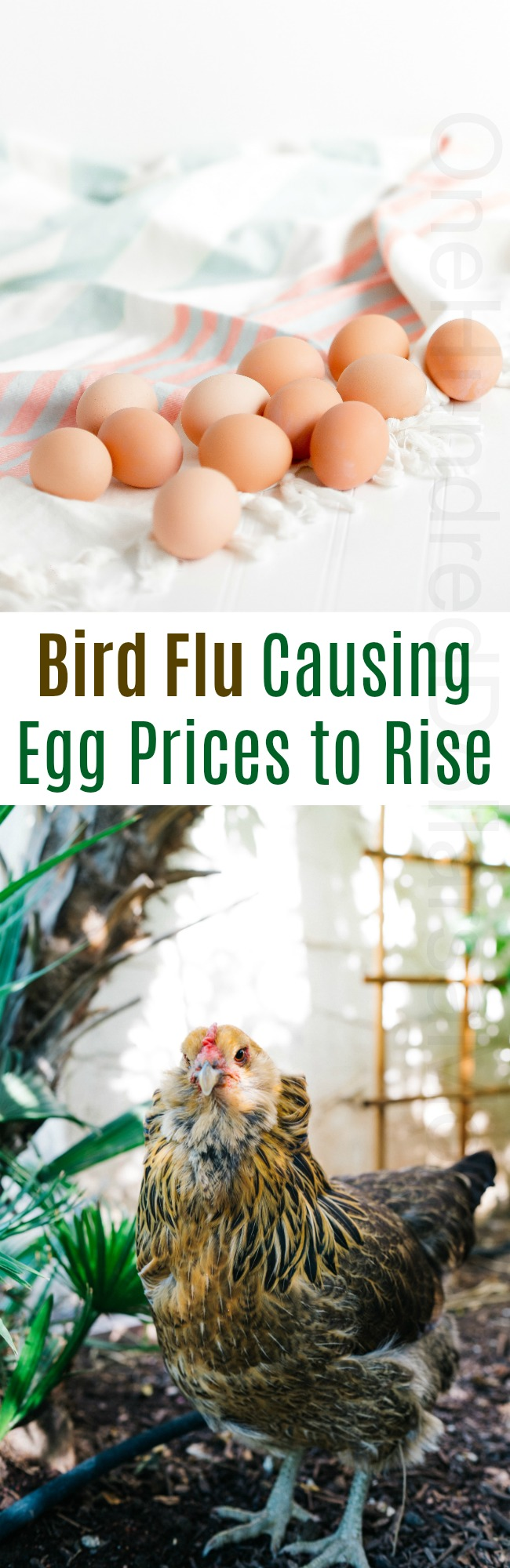 Bird Flu Causing Egg Prices to Rise