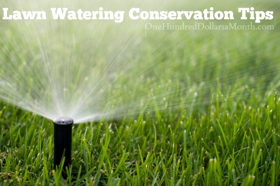 Lawn Watering Conservation Tips