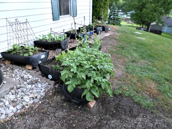Shelly From Iowa Sends in Pictures of Her Container Garden