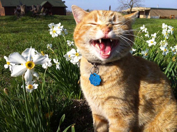 Mavis Mail – Jenna From Missouri Sends in Pictures of Her Animals