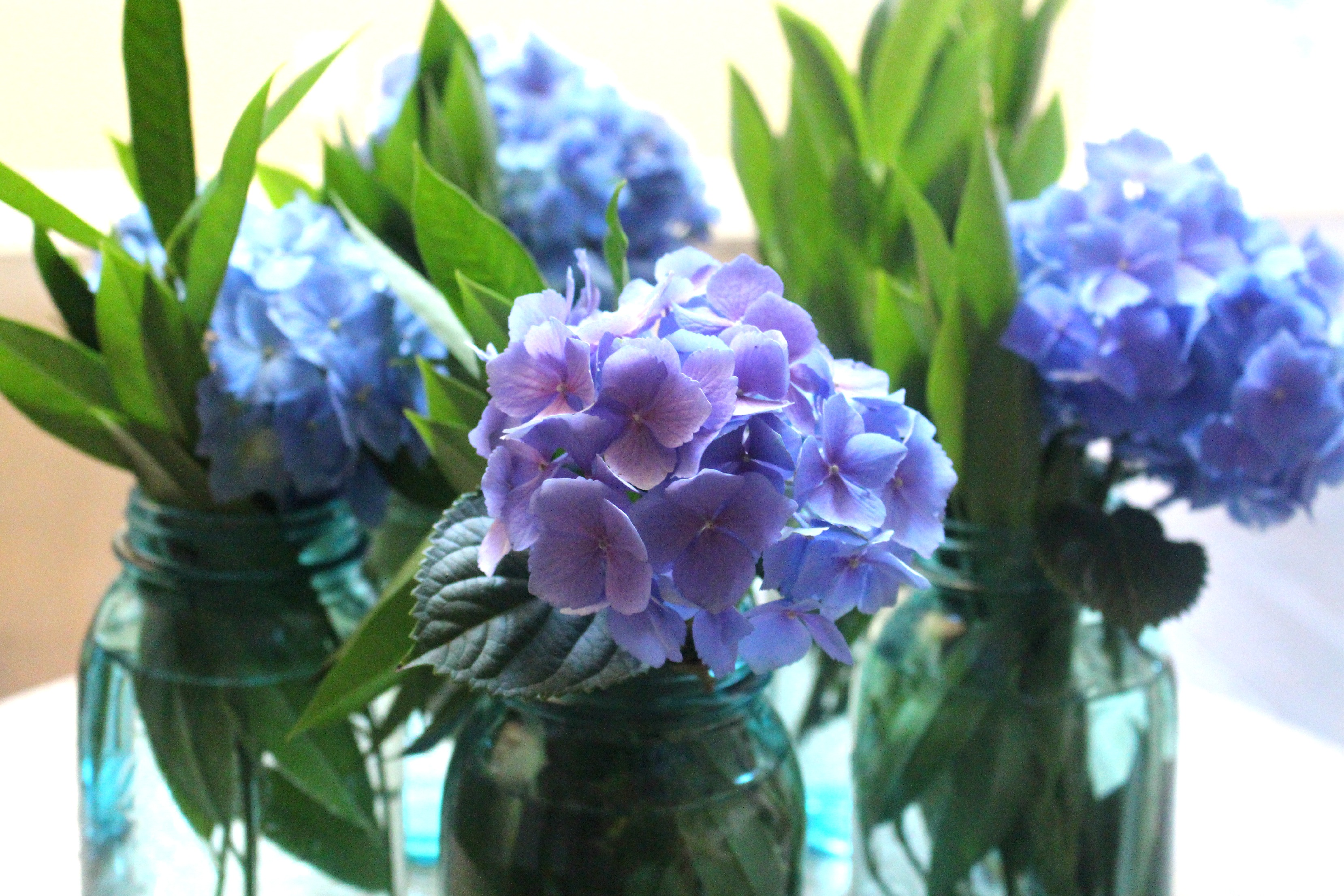 How to Change to Color of Your Hydrangea Plants