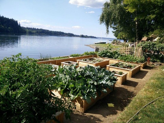 Henrietta From the Pacific Northwest Sends in Her Garden Pictures