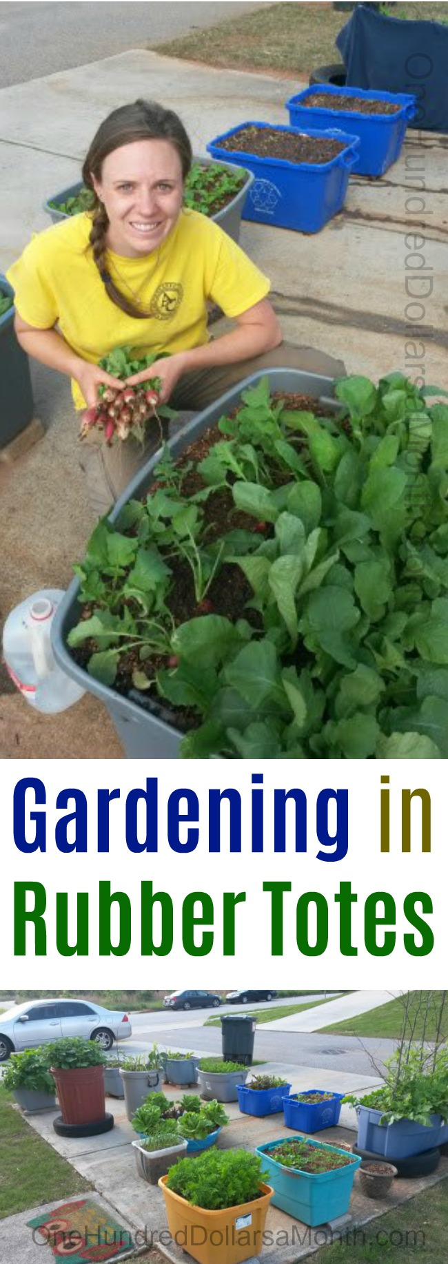 Christine From North Georgia Sends in Pictures of Her Container Garden