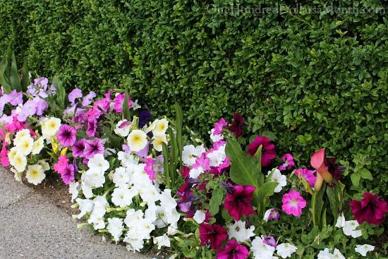 Mavis Butterfield | Backyard Garden Plot Pictures 6/28/15