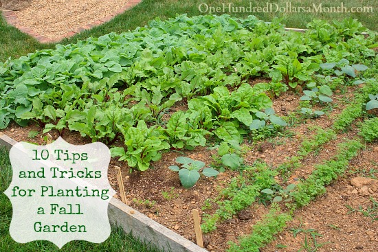 10 Tips and Tricks for Planting a Fall Garden