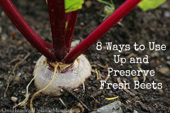 8 Ways to Use Up and Preserve Fresh Beets