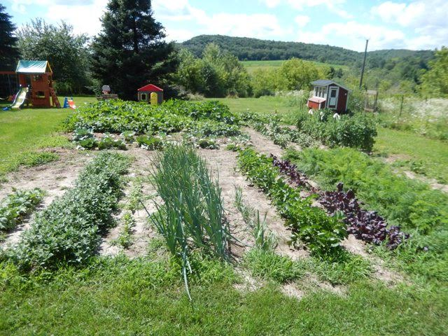 Lindsey From Western Wisconsin Amish Country Sends in Pictures of Her Garden