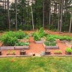 Mavis Mail – Heather From Massachusetts Sends in Her Backyard Garden Photos