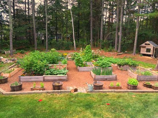 Mavis Mail – Heather From Massachusetts Sends in Her Backyard Garden Photos