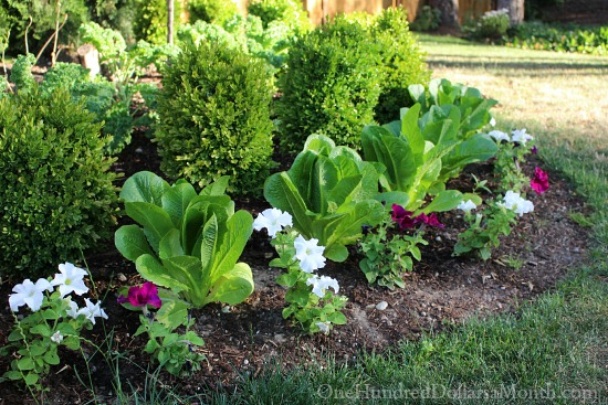 Mavis Butterfield | Backyard Garden Plot Pictures 7/5/15