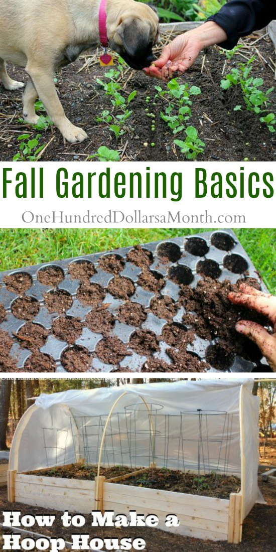 Let's Get Those Fall Gardens Started, Shall We?