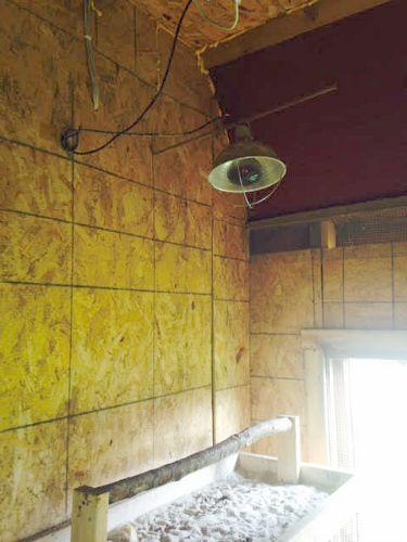 heating lamp for chicken coop