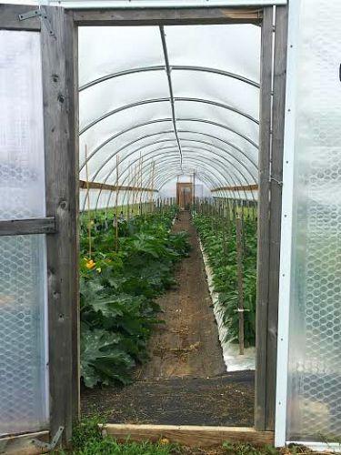 johnnys see company greenhouse maine