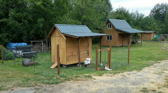 Mavis Mail – Dale From Sends in His Vegetable Garden and Chicken Coop Photos