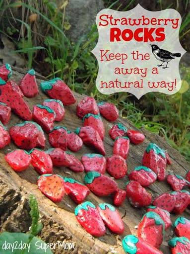 Painted Garden Rocks: Scare Birds Away the Natural Way