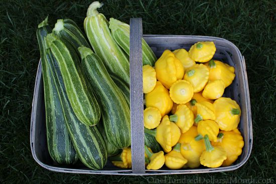 zucchini patty pan summer squash