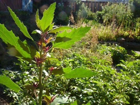 Mavis Mail – Jeannette Sends in Her Garden Photos