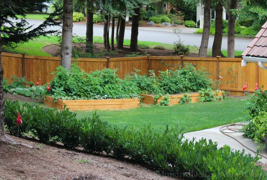 Mavis Butterfield | Backyard Garden Plot Pictures 8/9/15