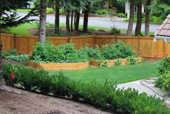 Mavis Butterfield | Backyard Garden Plot Pictures 8/9/15