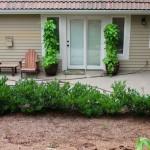 Mavis Butterfield | Backyard Garden Plot Pictures 8/30/15