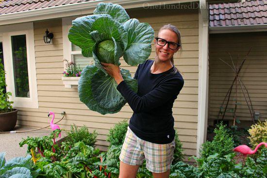 cabbage mavis butterfield