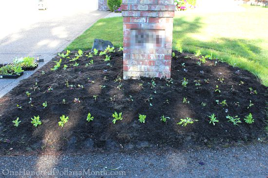 growing vegetables in your front yard