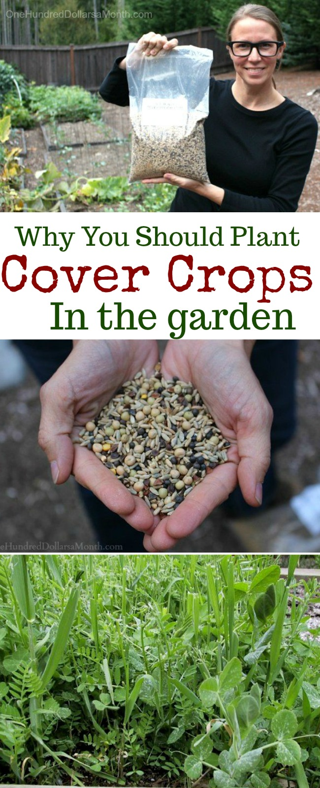 It's Time to Get Your Cover Crops Planted